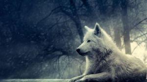 good wolf